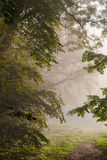 Krajobrazowy park przy mglistym rankiem Zdjęcie Royalty Free
