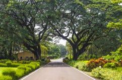 Krajobrazowy park, sposób prawda Obrazy Stock