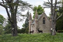 Krajobrazowy Parkowy Lasowy Szkocja Brytania Scone Wielki pałac 3 zdjęcia stock