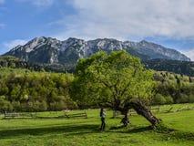 Krajobrazowy Piatra Craiului Zdjęcia Stock