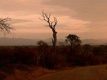 Krajobrazowy Południowa Afryka Zdjęcia Royalty Free