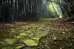 Krajobrazowy Purpura Zdjęcia Stock