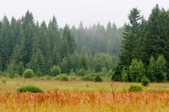 Krajobrazowy ranku las Obrazy Stock