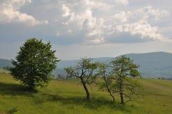 krajobrazowy Romania Obraz Stock