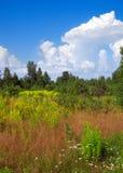krajobrazowy rosyjski lato Zdjęcia Stock