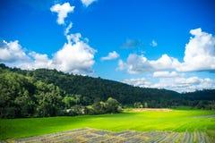Krajobrazowy ryżu pole w Chiang mai obrazy stock