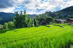 Krajobrazowy ryżu pole w Chiang mai Zdjęcia Stock