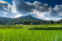 Krajobrazowy ryżu pole w Chiang mai 1 Zdjęcie Royalty Free