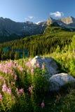 krajobrazowy s tatra Obrazy Stock