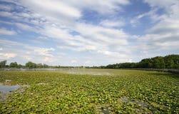 krajobrazowy sceniczny Fotografia Stock