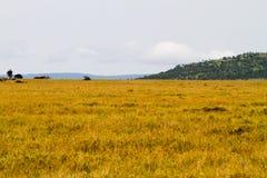 Krajobrazowy Serengeti park narodowy, Tanzania Zdjęcia Stock