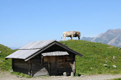 krajobrazowy szwajcar Obrazy Royalty Free