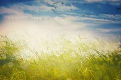 Krajobrazowy tło z ptakami Fotografia Stock