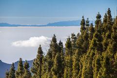 krajobrazowy Tenerife Zdjęcie Stock
