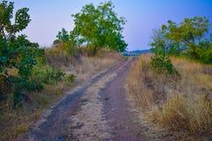 Krajobrazowy tree& x27; s piękno folująca natura Zdjęcia Royalty Free