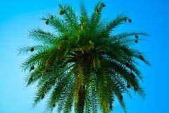 Krajobrazowy tree& x27; s piękno folująca natura Zdjęcia Stock