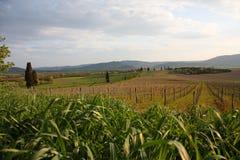krajobrazowy Tuscan Fotografia Royalty Free