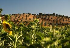 Krajobrazowy Tuscany, Włochy fotografia royalty free