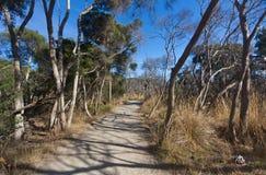 Krajobrazowy widok ścieżka w odludzie krzaku Australia fotografia stock