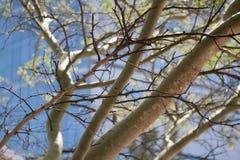 Krajobrazowy widok drzewo w miasto kwadracie w Durban, Południowa Afryka Obrazy Stock