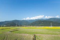 Krajobrazowy widok irlandczyków ryż pola w Tajwan obrazy stock