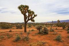 Krajobrazowy widok Joshua drzewa park narodowy, Kalifornia, Stany Zjednoczone zdjęcie royalty free