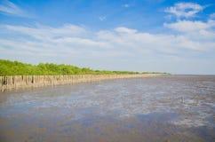 Krajobrazowy widok namorzynowy las Zdjęcia Stock