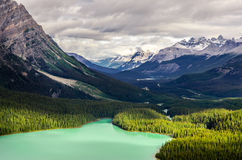 Krajobrazowy widok Peyto jezioro i góry, Kanada Fotografia Royalty Free