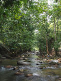 Krajobrazowy widok rzeka w lesie zdjęcia stock