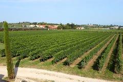 Krajobrazowy widok staranny lato winnica Obraz Royalty Free