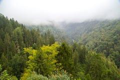 Krajobrazowy widok Wśród Dużych Zielonych sosen fotografia stock