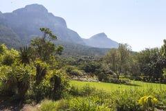 Krajobrazowy widok wśrodku Kirstenbosch ogródów botanicznych w Kapsztad Zdjęcia Stock