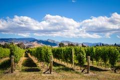 Krajobrazowy widok winnica w Marlborough wina kraju, NZ Obraz Stock