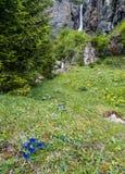 Krajobrazowy widok wysoka malownicza siklawa w bujny zieleni lesie i góra krajobraz z Enzian kwitnie fotografia royalty free
