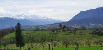 krajobrazowy winnica Fotografia Royalty Free