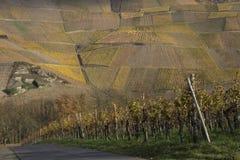 krajobrazowy winnica Zdjęcia Royalty Free