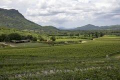 Krajobrazowy winnica Obrazy Stock