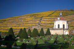 krajobrazowy winnica Zdjęcie Royalty Free