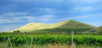 krajobrazowy winnica Obraz Stock