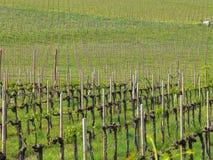 krajobrazowy winnica Obraz Royalty Free