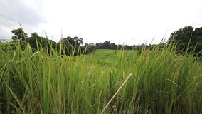 Krajobrazowy zielonej trawy pole, Khao Yai park narodowy, Tajlandia zdjęcie wideo