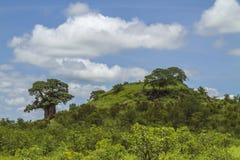 Krajobrazu i baobabu drzewo w Kruger parku narodowym Obrazy Stock