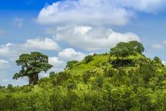 Krajobrazu i baobabu drzewo w Kruger parku narodowym Obraz Royalty Free