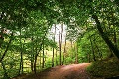 Krajobrazu koloru piękna lasowa natura Fotografia Stock