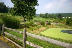 krajobrazu pastoralny Fotografia Stock