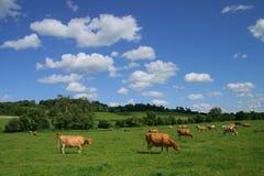 krajobrazu pastoralny Zdjęcie Stock