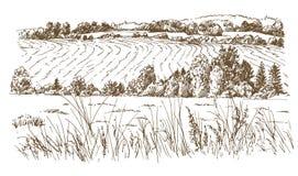 krajobrazu rolniczego Łąki lub pola ilustracja wektor