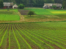 krajobrazu rolniczego Zdjęcia Stock
