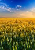krajobrazu rolniczego Obrazy Stock