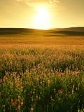 krajobrazu rolniczego Obraz Royalty Free